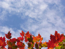 Fall leaves. Colorful fall leaves and blue sky with clouds Stock Images