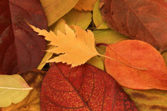 Free Fall Leaves Stock Photography - 45730212