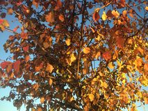 Fall Leaves. Of Stock Photo