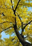 fall leaves Στοκ φωτογραφία με δικαίωμα ελεύθερης χρήσης