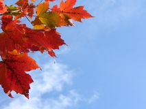 Fall leaves. In front of blue sky with clouds Royalty Free Stock Image