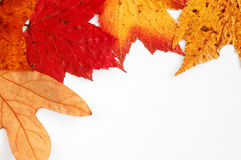 Fall leaves. In the corner Royalty Free Stock Photos