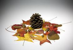 Fall Leaves. Image of colorful fall leaves and acorn stock image