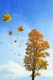Fall of the leaves Royalty Free Stock Photography