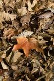 fall leaves Στοκ εικόνες με δικαίωμα ελεύθερης χρήσης