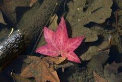 fall leaves Στοκ Εικόνα