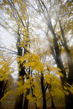 Fall Leaves. Fall foliage on a wet rainy day in Rhode Island, New England, USA stock photo
