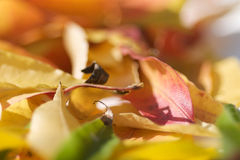 Fall leaves. Fall collection, Beautiful fall in Northern California Stock Image