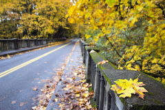 Fall Leaves Along Historic Columbia Highway Bridge. With Blurred Background Royalty Free Stock Photos