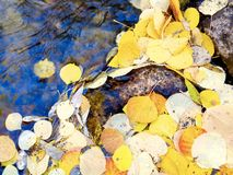 Fall leaves along a stream Royalty Free Stock Image