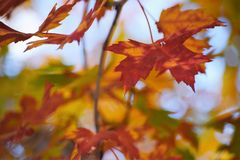 Fall leaves. Amazing fall picture of leaves red yellow green and orange with a light blue sky royalty free stock photos