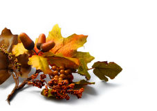 Fall Leaves And Acorn Royalty Free Stock Photography