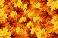 Fall leaves (Autumn) Royalty Free Stock Photos
