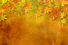 Fall leaves - autumn background Stock Photos