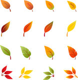 Fall Leaves, Autumn Leaves, Leaves Vectors Stock Photography