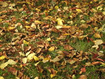Fall leaves. Autumn leaves strewn on the ground Royalty Free Stock Photography
