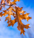 Fall Leaves Autumn. Sunny Day Midwest Illinois Stock Images
