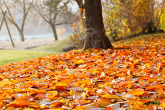Fall leaves in the autumn Stock Image