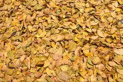 Fall leaves background Royalty Free Stock Photography