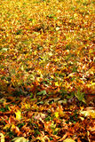 Fall leaves background. Background of falling leaves texture stock image