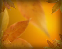 Fall leaves background Stock Photo