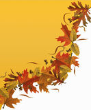 Fall leaves background stock image