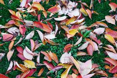 Fall leaves background. Autumn concept, leaves on ground royalty free stock images