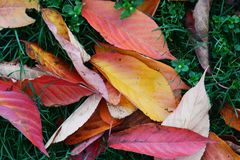 Fall leaves background. Autumn concept. stock photography