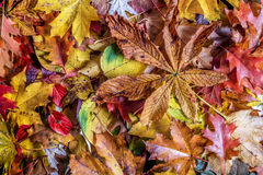 Fall leaves background. Colorful autumn background. royalty free stock photography