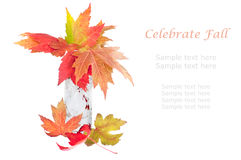 Fall leaves background. Stock Image