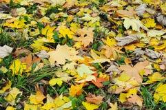 Fall leaves background, Fall Foliage, Beautiful Fall Colors. Fall leaves background, Fall Foliage,  Fall Colors Stock Photos