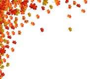 Fall Leaves Background. Vector Illustration of an Autumn Design Royalty Free Stock Image