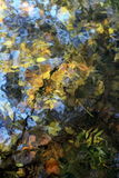 Fall Leaves Backgrounds. Image taken of dead leaf laying in shallow water at fall time royalty free stock image