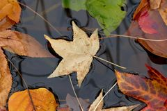 Fall leaves. Beautiful autumn leaves on the pond Stock Photo