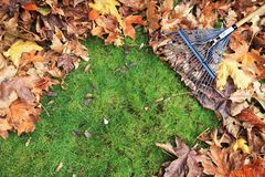 Fall Leaves being Raked from Grass. Fall leaves being raked from bottom left of image to top right creating open area on green grass for copy royalty free stock photos