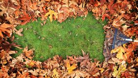 Fall Leaves being Raked from Grass 2. Fall leaves being raked from grassy lawn creating cleared area for copy on green grass royalty free stock image