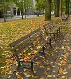 Fall Leaves on Benches Along Park 2 Royalty Free Stock Image