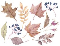 Fall leaves and berries. Autumn watercolor clipart. Hand-drawn botanical illustration.
