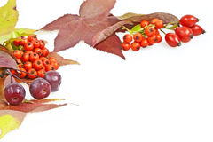 Fall leaves and berries decoration Stock Photo