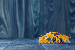 Fall leaves on blue background Royalty Free Stock Photos