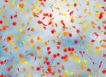 Fall of the leaves on blue cloudiness sky background Royalty Free Stock Photos