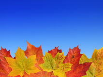 Fall leaves on the blue sky Stock Photography