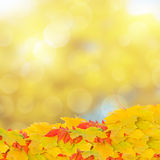 Fall leaves on bokeh background