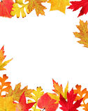 Fall leaves border. Frame made of colorful autumn leaves on white background stock photo