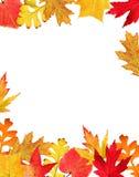 Fall leaves border stock photo