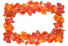 Fall Leaves Border Frame. Autumn red leaves border, isolated on a white background Royalty Free Stock Images