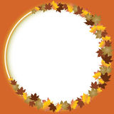 Fall leaves border over white Royalty Free Stock Image