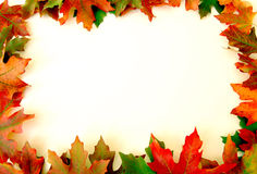 Fall Leaves Border on White Stock Image