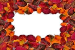 Fall leaves border on white. Autumn leaves on white background on border of photo Royalty Free Stock Photos