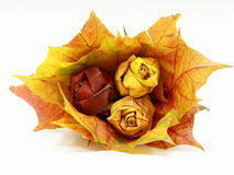 Fall leaves bouquet Stock Photos